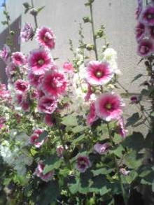 ハンドメイド布バッグ屋 ::: shiroi mokuren の庭  :::